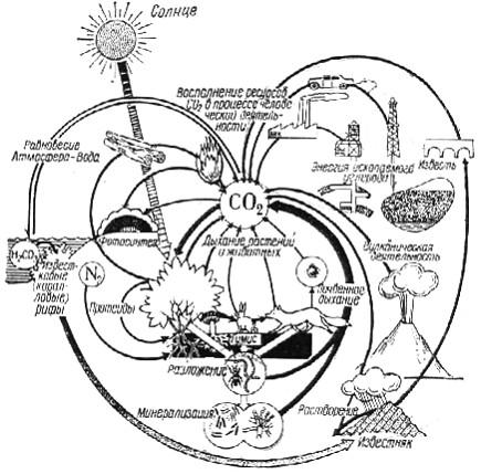 Подобный круговорот углерода