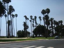 Пальмы рядом с пляжем на Оушн-авеню