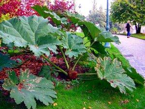 растения гиганты