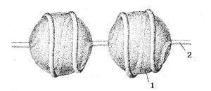 Рис. 5. Структура хроматина: 1 – нуклеосома, 2 – ДНК