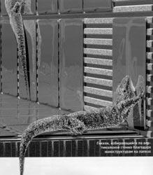 Наноструктуры на лапках геккона подсказали ученым новый состав клея для плитки