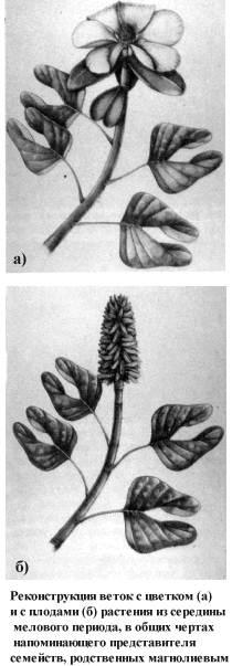 Реконструкция растения изсередины мелового периода