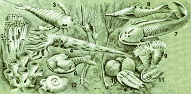 Фауна раннего палеозоя (кембрий, ордовик, силур)